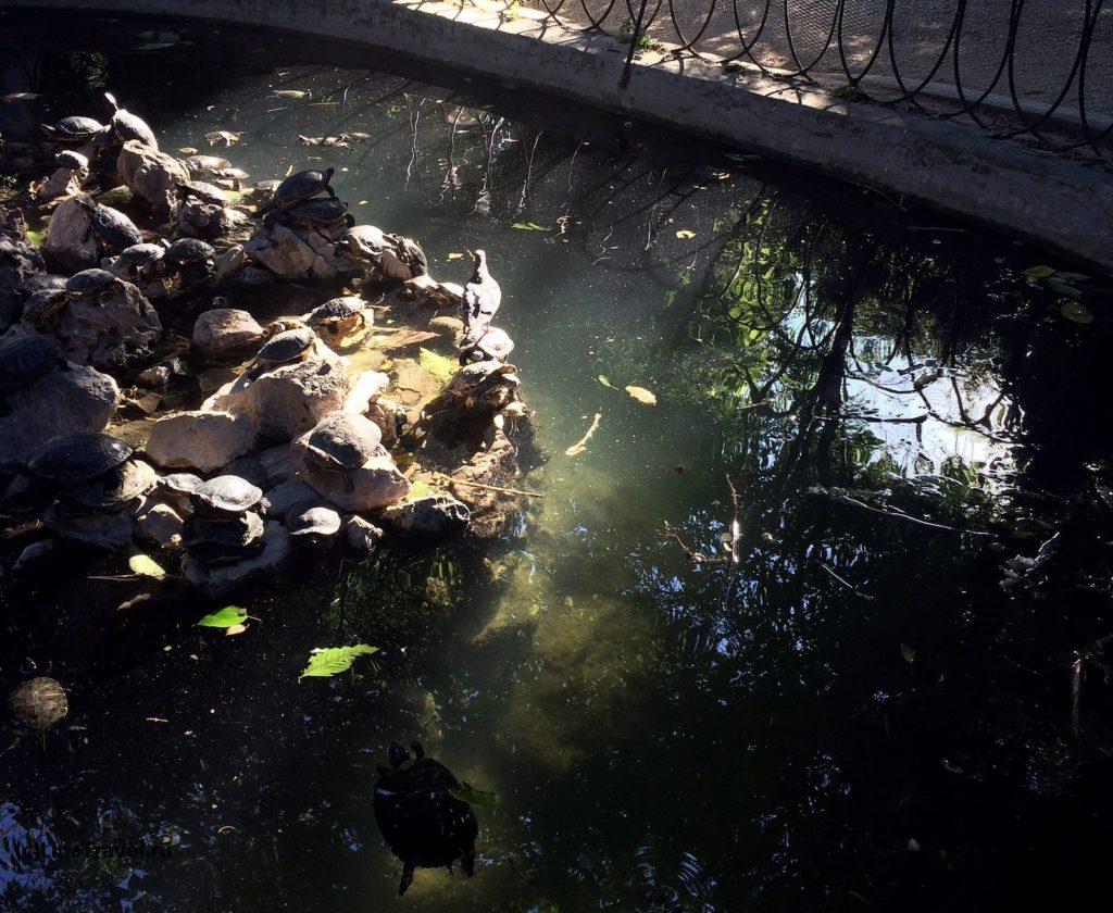 Черепахи в пруду Национального сада в Афинах